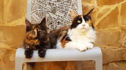 Frida y Jinxy