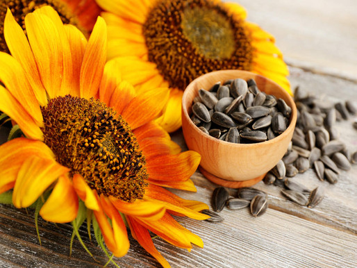 Indian Sunflower seed