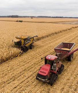 Harvest%20of%20corn%20in%20Southwest%20M