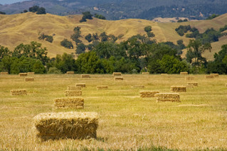 Hay is Not Just for Horses