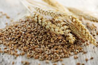 Grains & Concentrates Part II