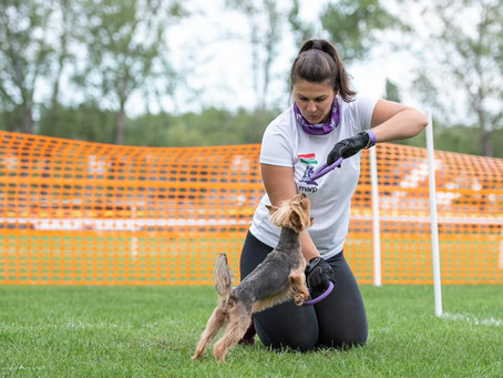 Are you looking for a new sport to try? Check out DOG PULLER on the Amazing Dog Stage