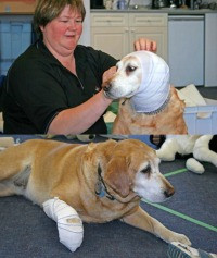 CDART - Animal Rescue Journey: Learn how to keep your pet safe!