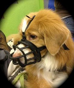 muzzle px.jpg_e471b0.jpg