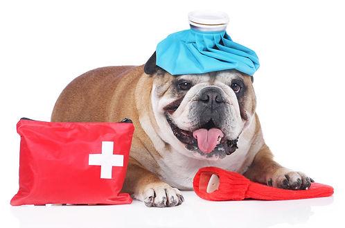 pet-first-aid-1.jpg