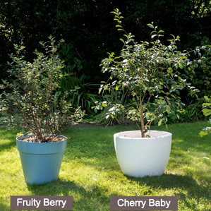 LUCKY BERRY_FRUITY BERRY_CHERRY BABY_FIG