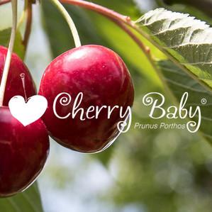 visuel page CHERRY BABY.jpg
