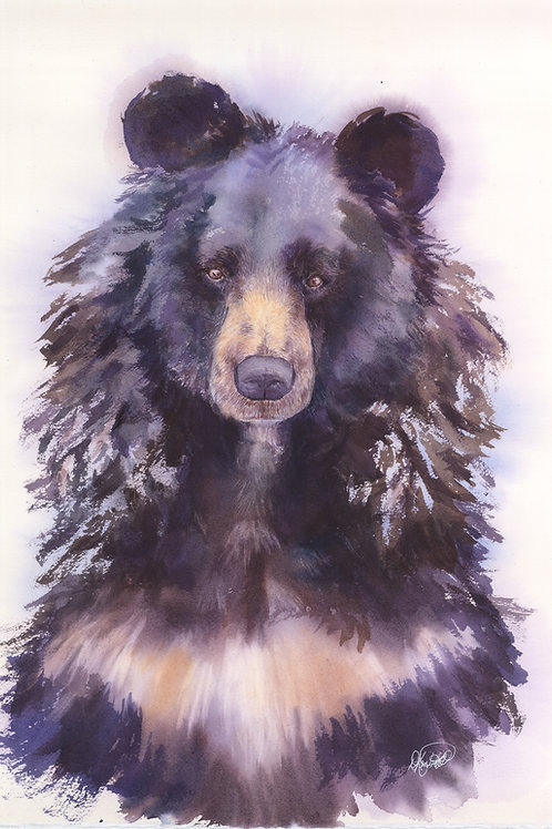 Dreamy Asiatic Bear Print