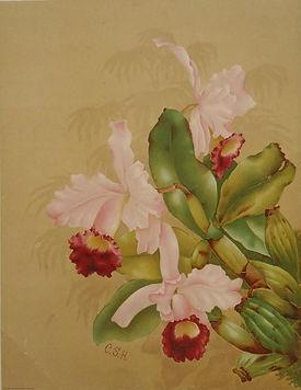 CSH orchid.jpg