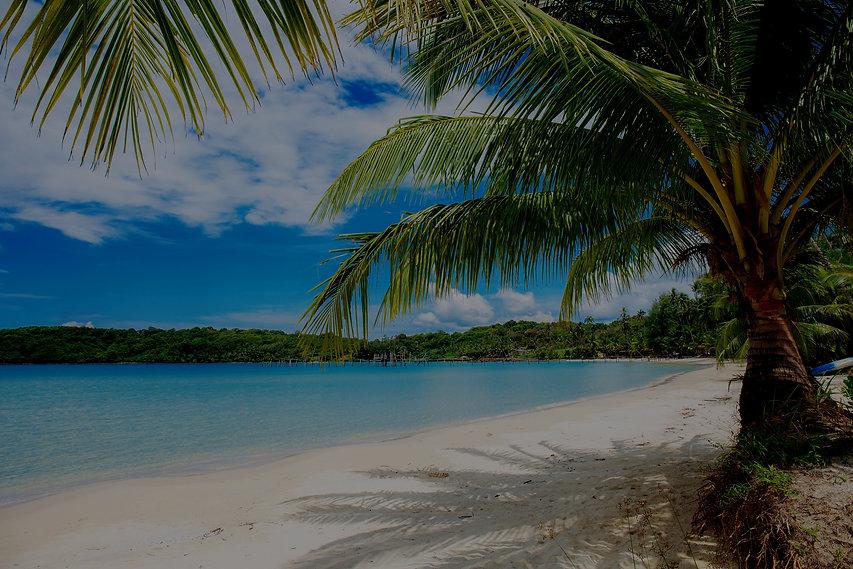 plage avec des palmiers et du sable