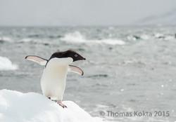 Antarctica5.jpg