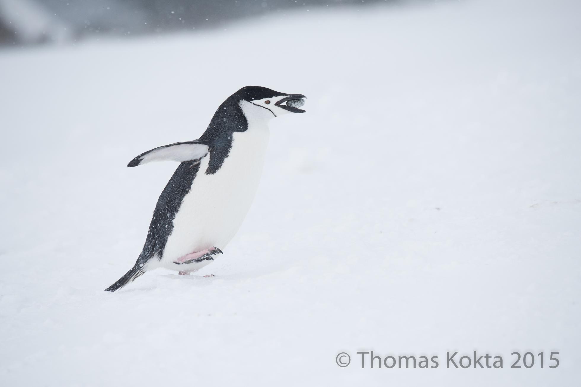 Antarctica8.jpg