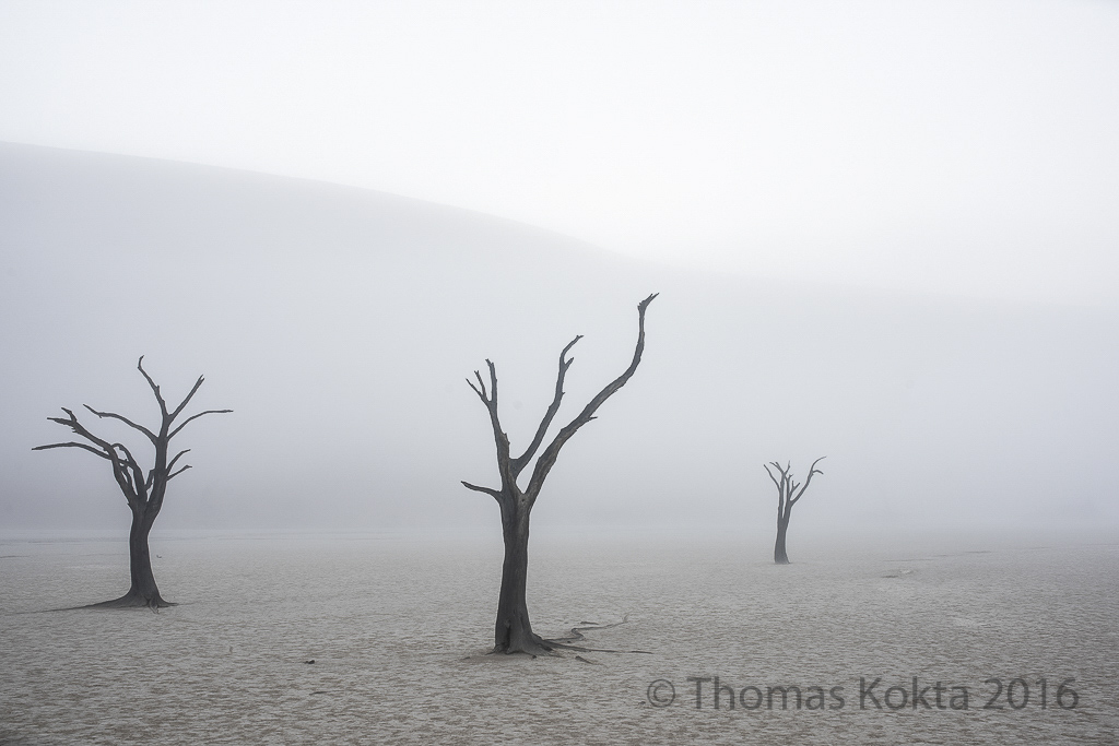 Kokta-Thomas_DeadDesertTrees