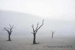 Kokta-Thomas_DeadDesertTrees