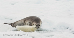 Seal7.jpg