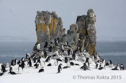 Antarctica9.jpg
