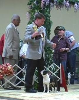 Jean-Luc wins Futurity Best Puppy at BTC