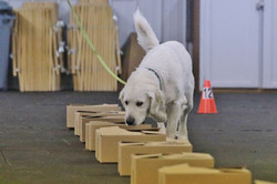 nosework trial sunday 047
