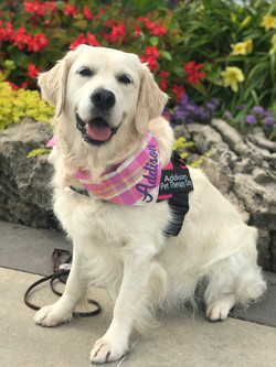 Addie pet therapy August 2019