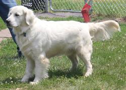 Gryff (a Jolly/Axel puppy)