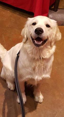 Daisy at Bass Pro's dog days