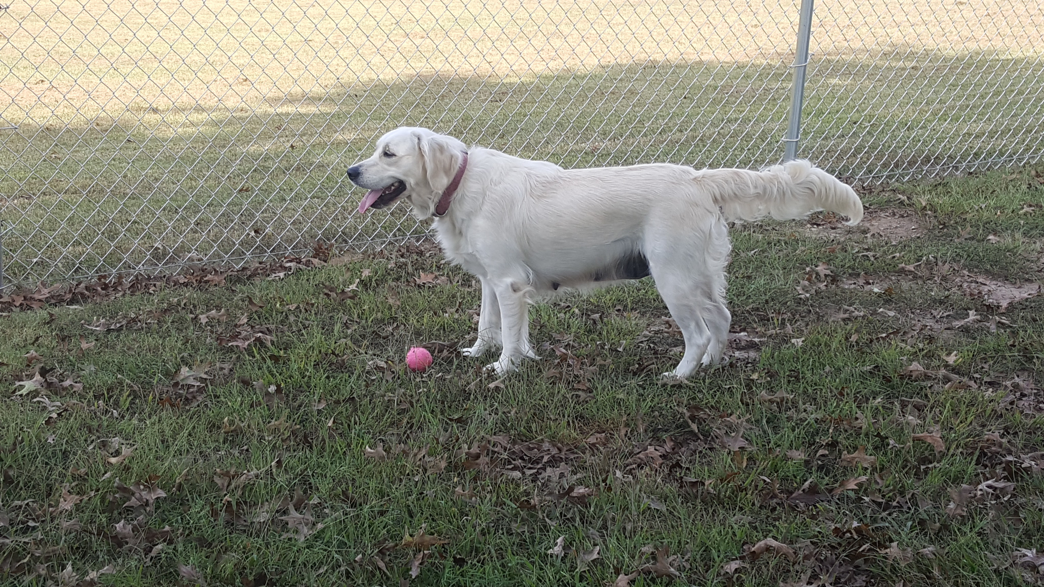 Addie at dog park in Arkansas