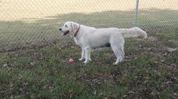 Addie at dog park in Arkansas