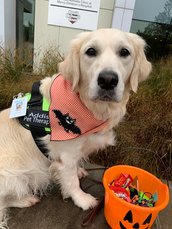 Addie pet therapy October 2019