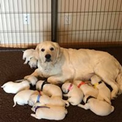 Daisy and her puppies