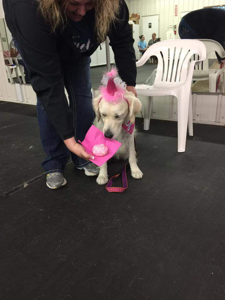 Addie dog club birthday
