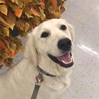 Community Canine Class