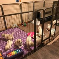 puppy area