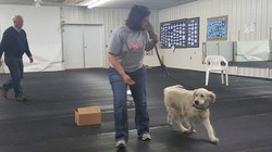 Jenica and Jolly at nosework practice