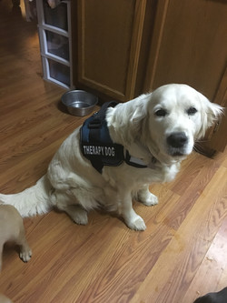 Jolly Therapy Dog