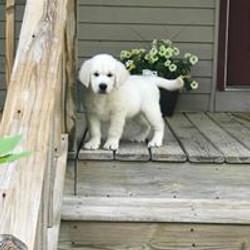 Daisy/Cruise puppy