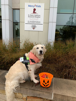 Addie pet therapy October 2019A