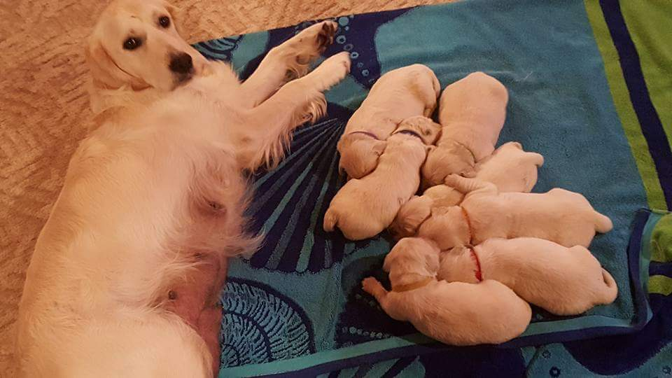 Addies Puppies 6.16