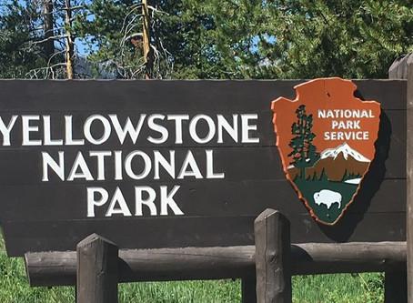 À la découverte de Yellowstone