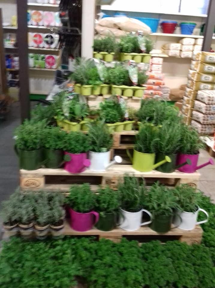 piante aromatiche.jpg