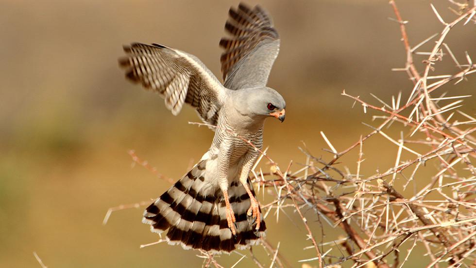 KAT wildlife photography_0076.jpg