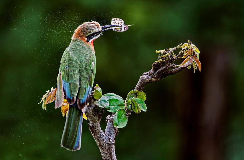 KAT wildlife photography_0051.jpg