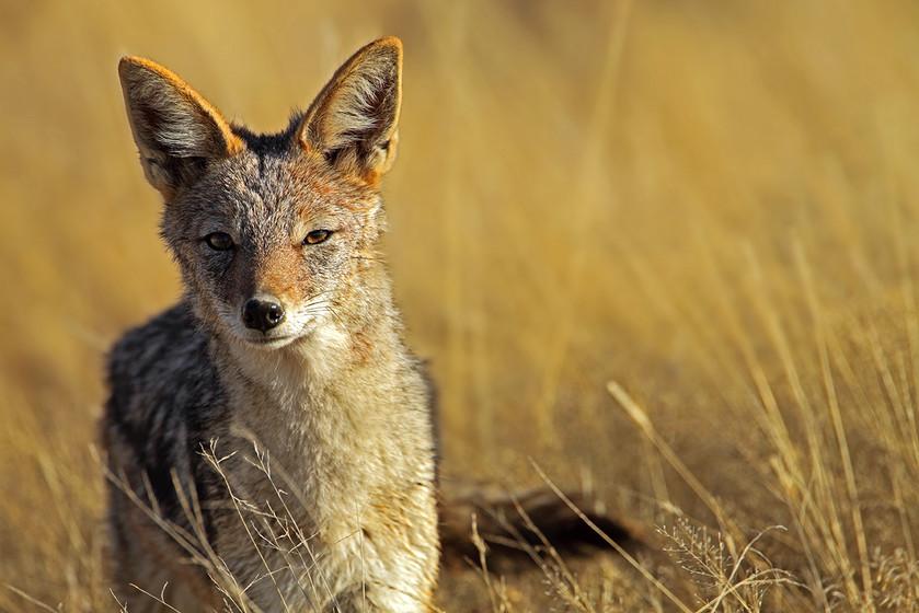 KAT wildlife photography_0044.jpg