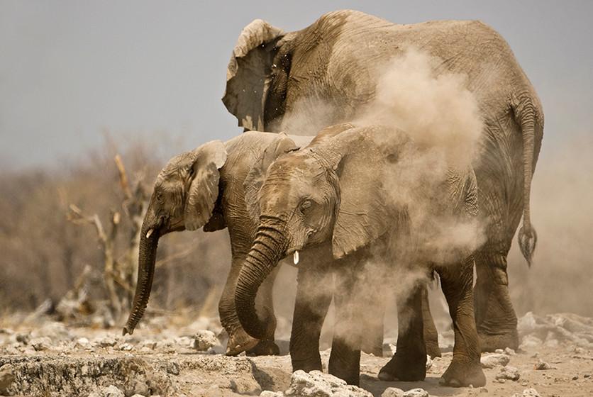 KAT wildlife photography_0047.jpg