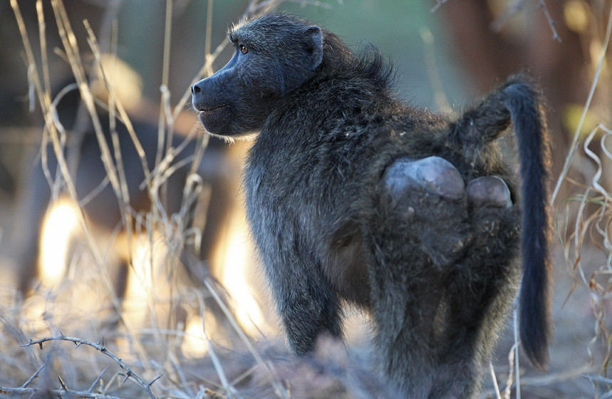 KAT wildlife photography_0053.jpg