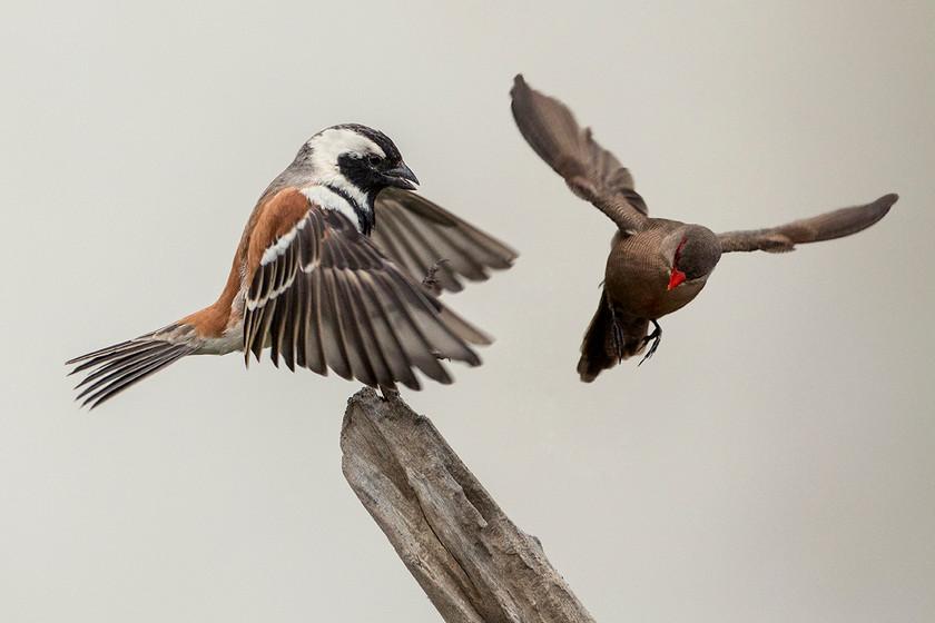KAT wildlife photography_0061.jpg