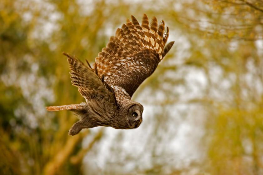 KAT wildlife photography_0063.jpg