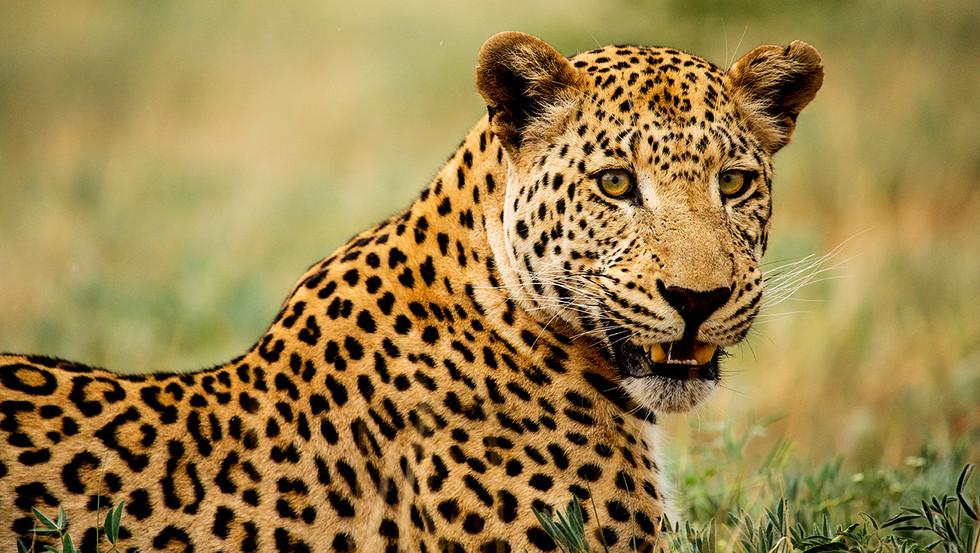 KAT wildlife photography_0072.jpg