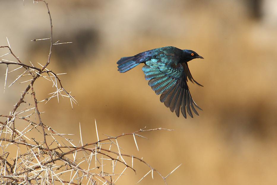 KAT wildlife photography_0055.jpg