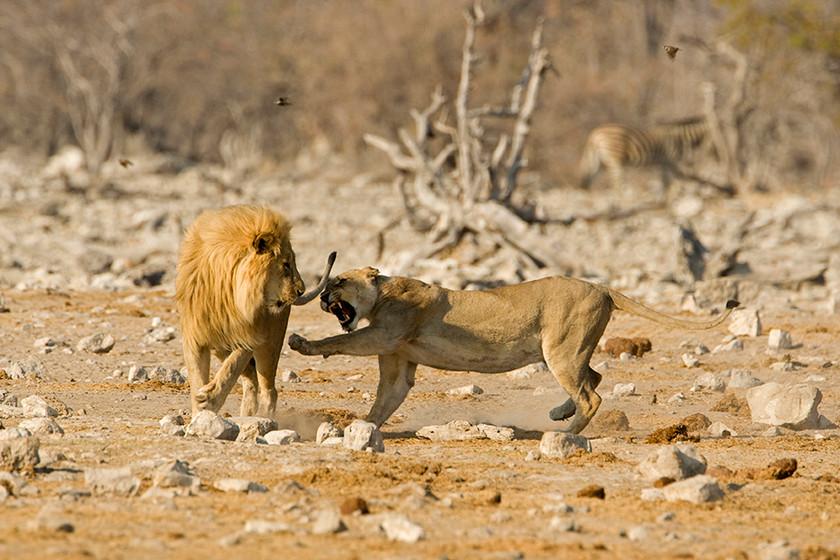KAT wildlife photography_0046.jpg