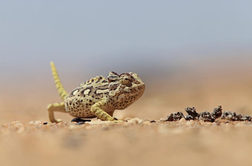 KAT wildlife photography_0037.jpg